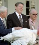 President Reagan Pardon's Turkey